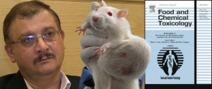 Seralini-tumour-rat-Food-and-Chemical-toxicology-710px