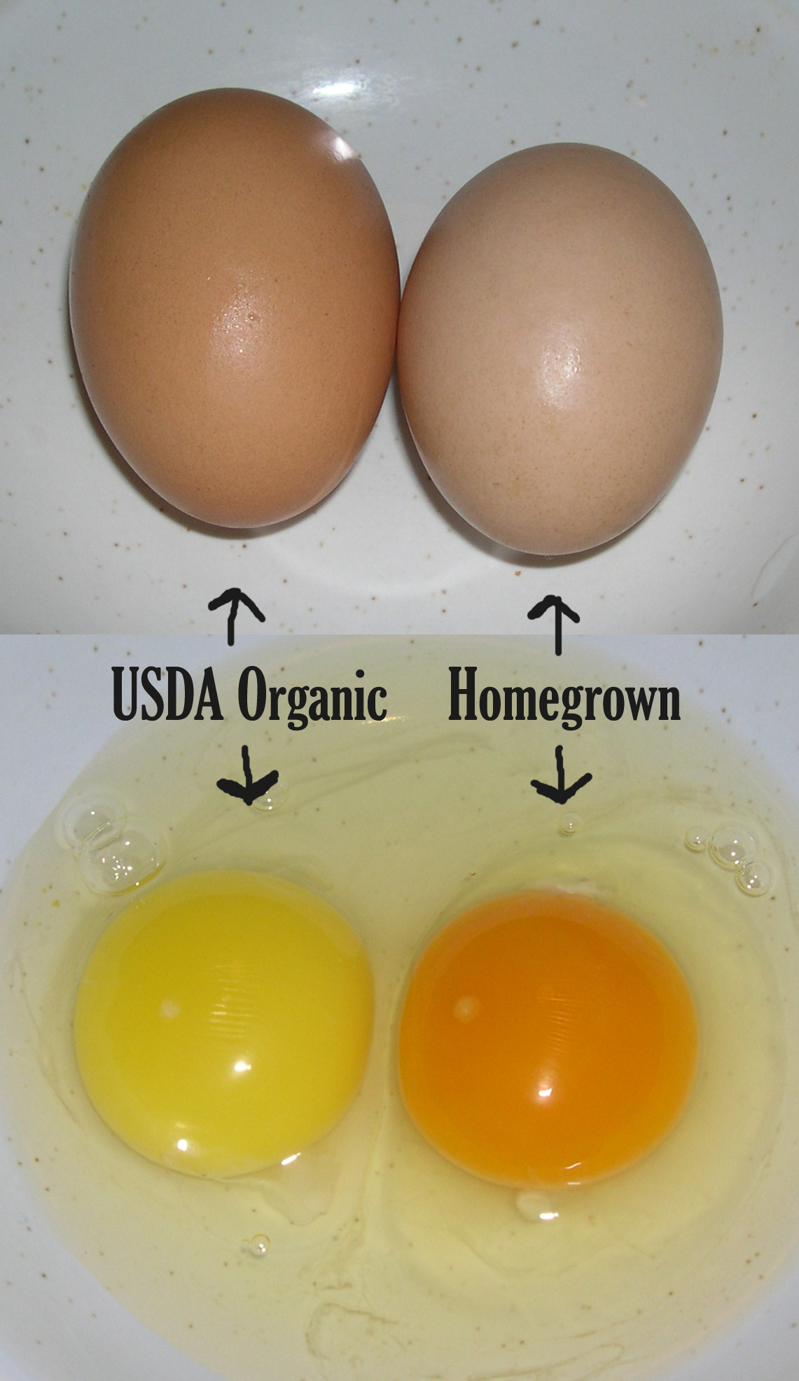 Organic Chicken vs Non Organic Chicken Non-certified Organic