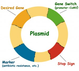 Plasmid copy