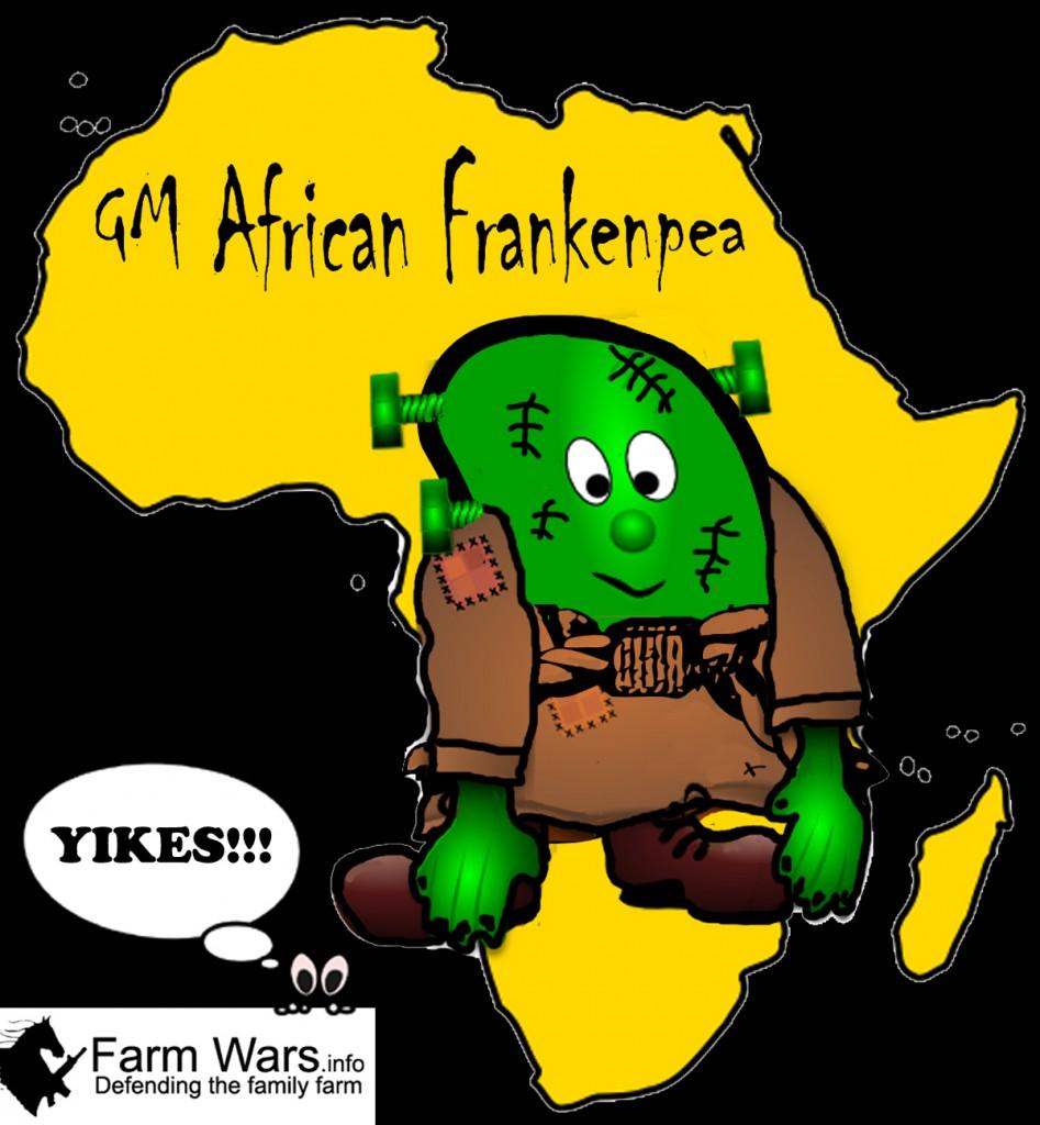 gm african frankenpea